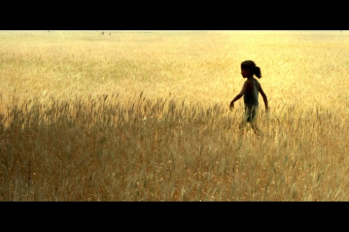 girl walking alone in a golden paddy field