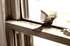 trapped-bird-sepia