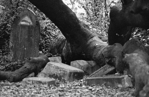 fallen tree grave